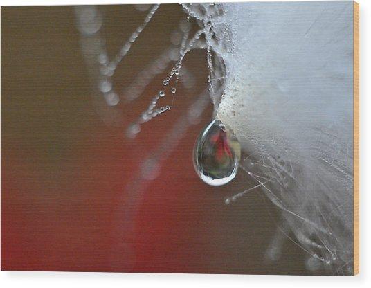 Dewdrop Lily On Milkweed Silk Wood Print