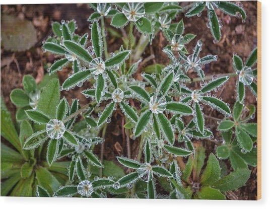 Diamond Flowers Wood Print by Kelly Kitchens