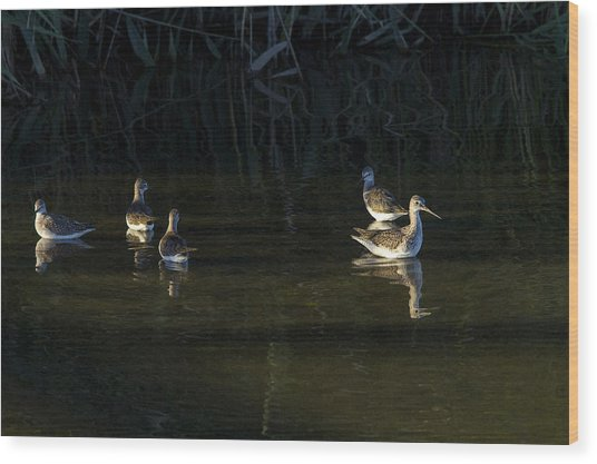 Digital Oil Of Sandpipers Wood Print
