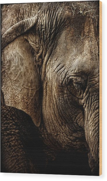 Dignity Of Age In Asian Elephant Study Wood Print by Lincoln Rogers