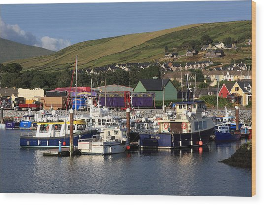 Dingle Harbour County Kerry Ireland Wood Print