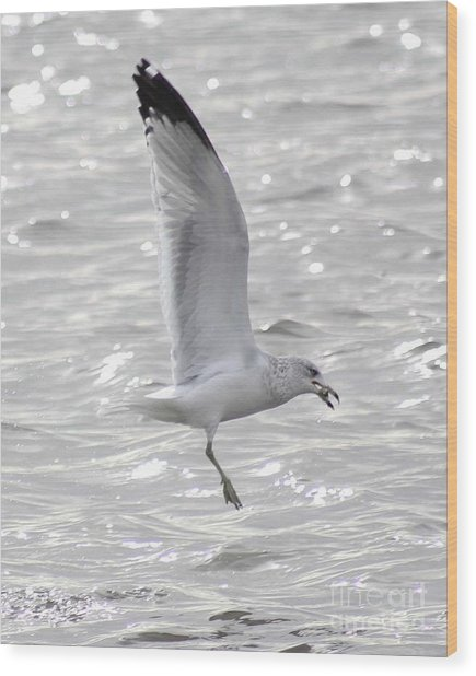 Dining Seagull Wood Print