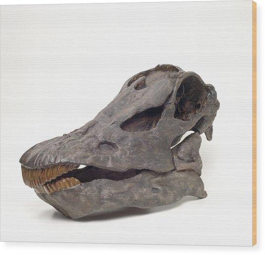 Diplodocus Carnegiei Skull Wood Print
