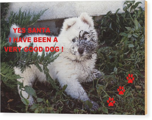 Dirty Dog Christmas Card Wood Print