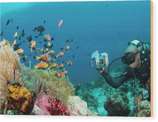 Diver Photographing Anemonefish Wood Print