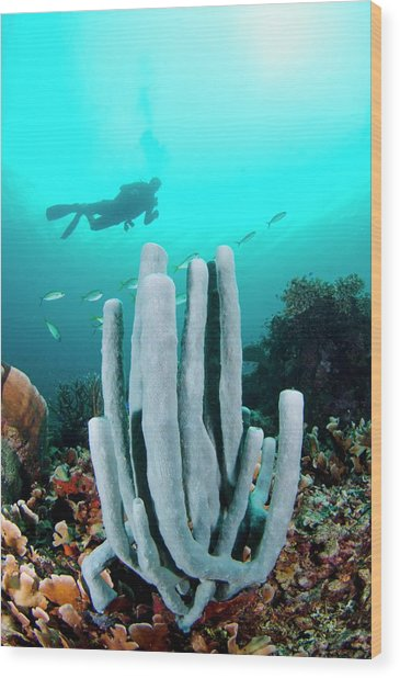 Diver Swimming Over A Tube Sponge Wood Print