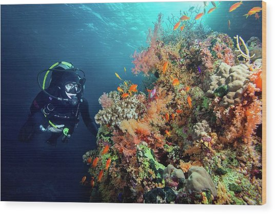 Diver With Corals And Reef Fish Wood Print