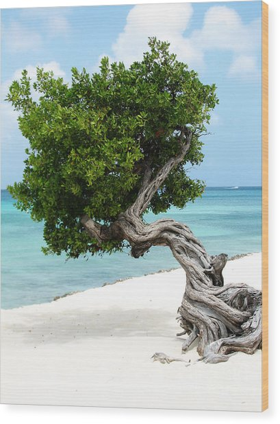 Divi Divi Tree In Aruba Wood Print