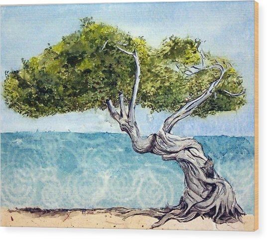 Divi Divi Tree Wood Print