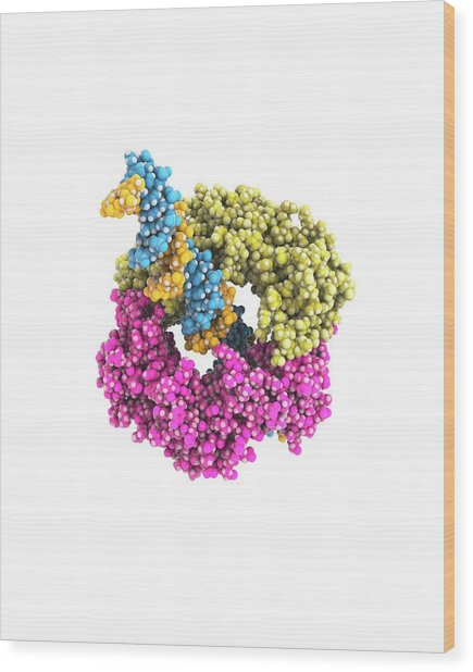 Dna Clamp Wood Print by Ramon Andrade 3dciencia
