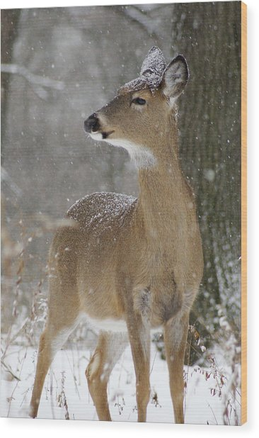 Doe In The Snow Wood Print