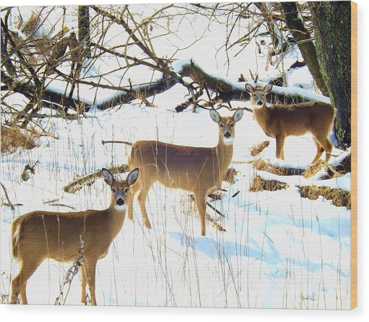 Does In The Snow Wood Print