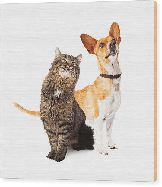 Dog And Cat Looking Up Together Wood Print