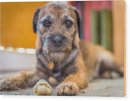 Dog And Chew. Wood Print