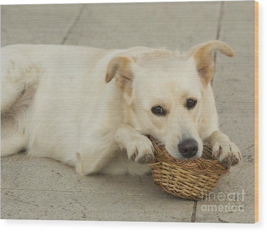 Dog Basket  Wood Print