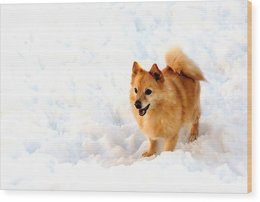 Dog In Snow Wood Print