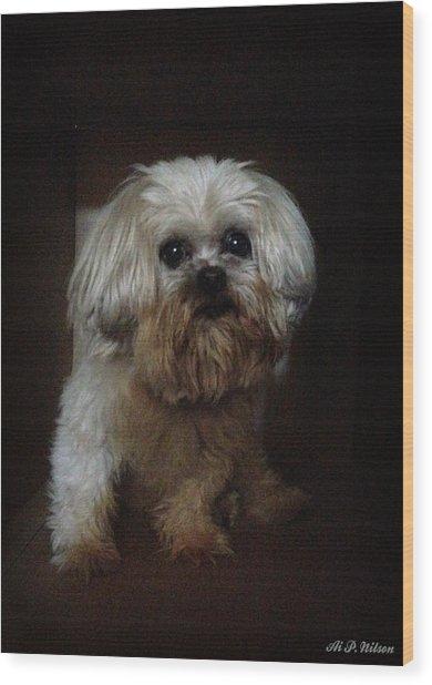 Dog In The Box Wood Print