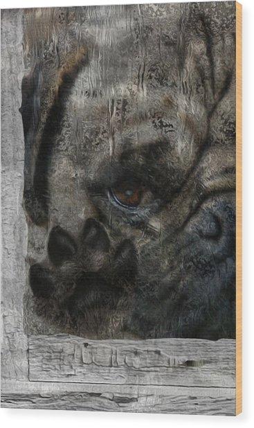 Dog In The Window Wood Print