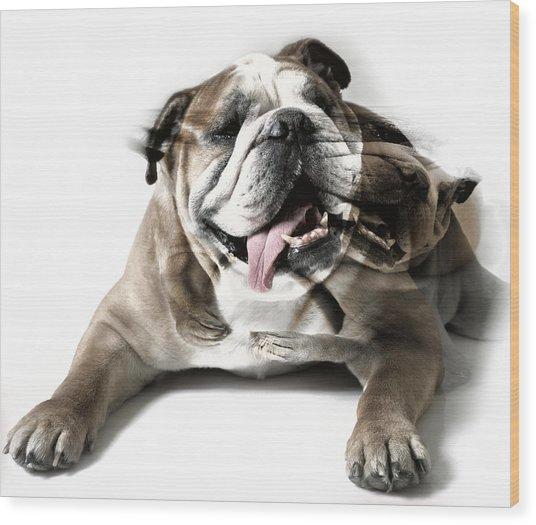 Dog Mastiff Wood Print
