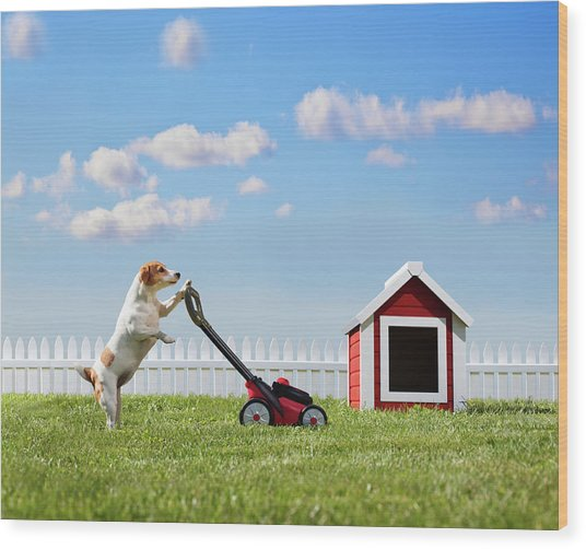 Dog Mowing Lawn Near Dog House Wood Print by Pm Images