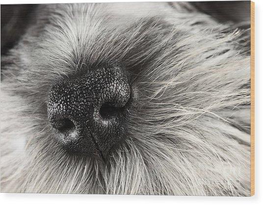 Dog Nose  Wood Print