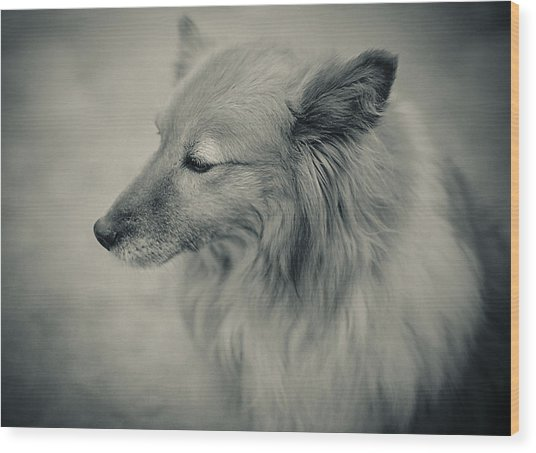 Lonely Dog Wood Print by Pro Shutterblade