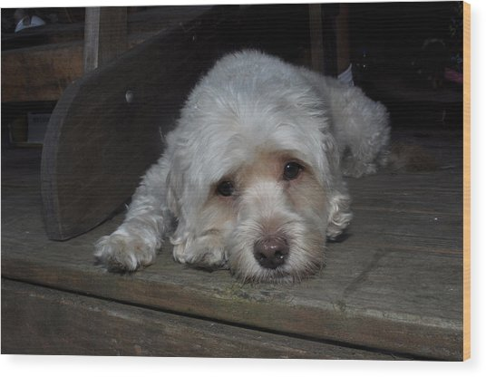Dog Resting On Porch Wood Print