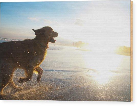 Dog Running On The Beach Wood Print by Giovani Cordioli
