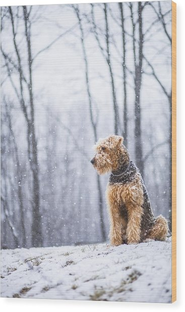 Dog Sits Under The Snowfall Wood Print