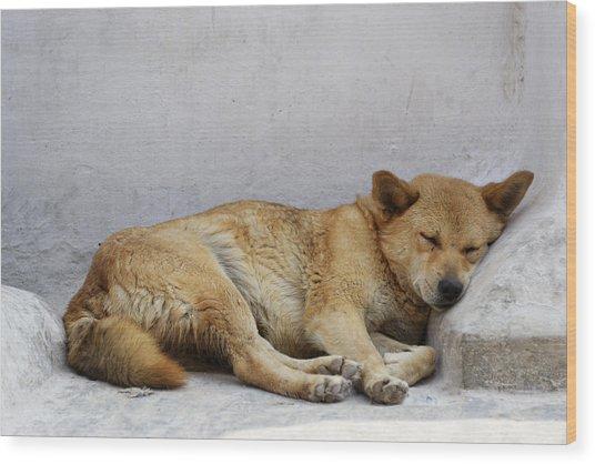 Dog Sleeping Wood Print