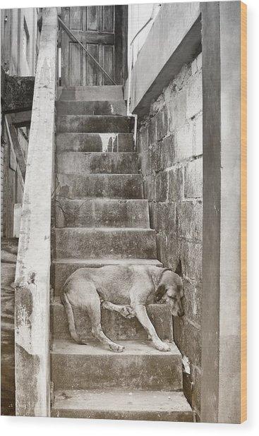 Dog Tired Wood Print