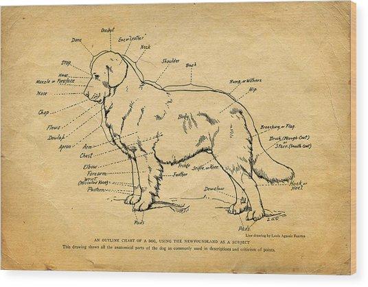 Doggy Diagram Wood Print