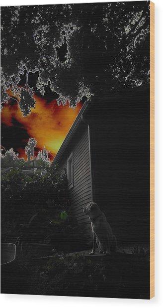 Dog's Dreamlike Eve Wood Print by Carolyn Olney