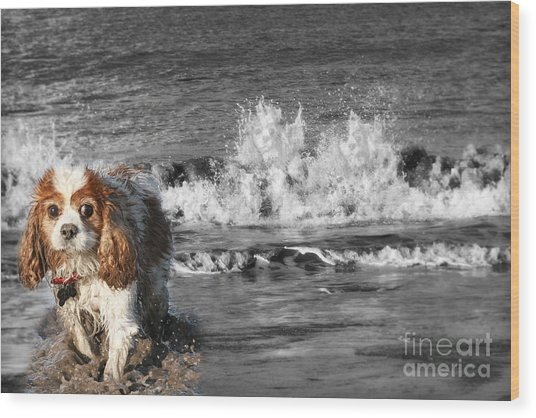 Dogs Enjoying The Sea Wood Print by Jo Collins