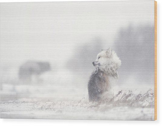 Dogs In The Storm Wood Print