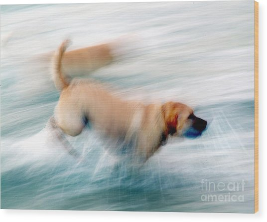 Dogs Running In Sea. Wood Print