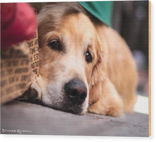 Wood Print featuring the photograph Dog's Sorrow by Stwayne Keubrick