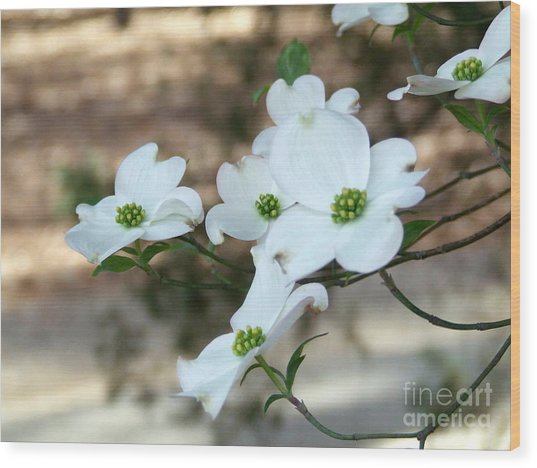 Dogwood 2 Wood Print
