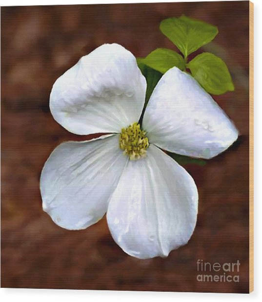 Dogwood Blossom Yosemite Wood Print