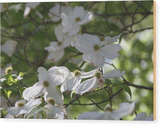 Dogwood Blossoms 3 Wood Print