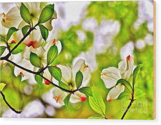 Dogwood Impressions I Wood Print by Jay Nodianos