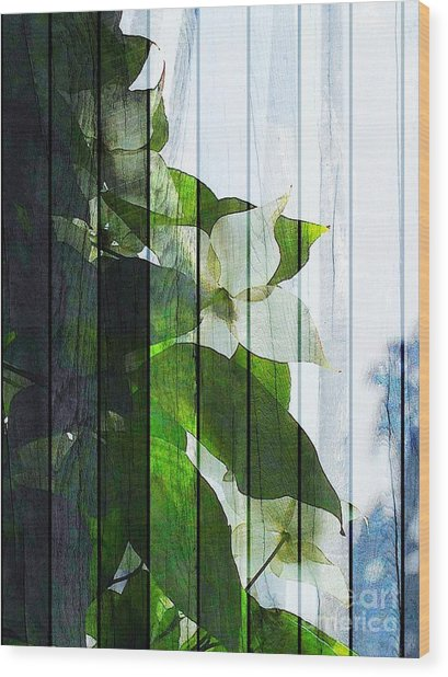 Dogwood Shades Wood Print