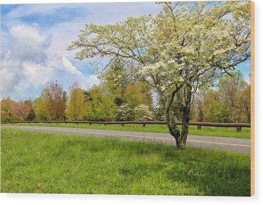 Dogwoods At Dickey Ridge Wood Print