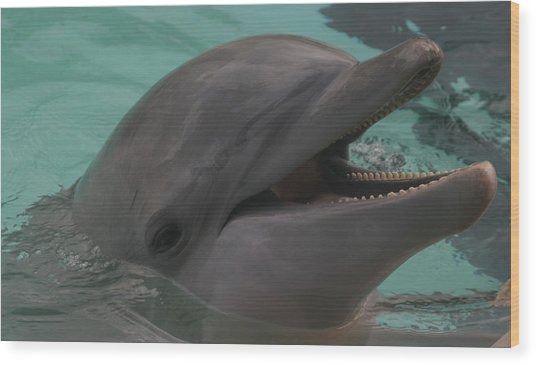 Dolphin Wood Print by Dervent Wiltshire