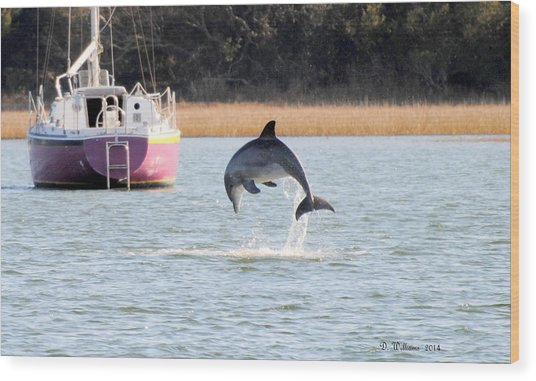Dolphin Jumping In Taylors Creek Wood Print