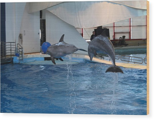 Dolphin Show - National Aquarium In Baltimore Md - 1212258 Wood Print by DC Photographer