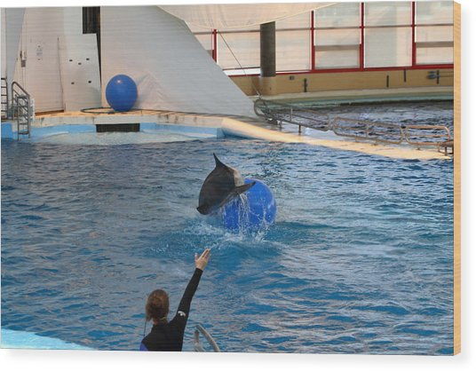 Dolphin Show - National Aquarium In Baltimore Md - 121241 Wood Print by DC Photographer