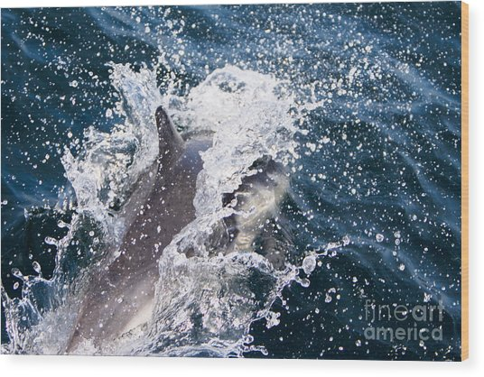 Dolphin Splash Wood Print