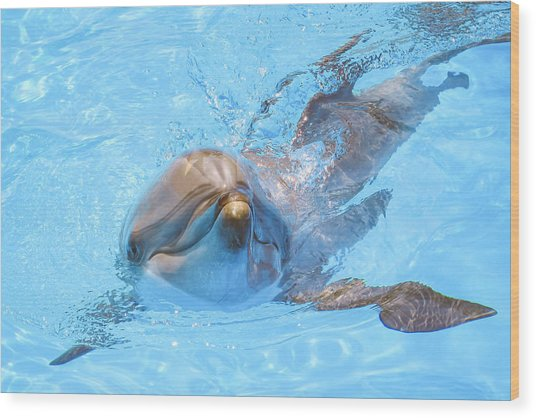 Dolphin Swimming Wood Print