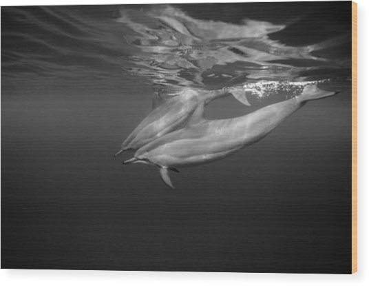 Dolphins 01 Wood Print by One ocean One breath